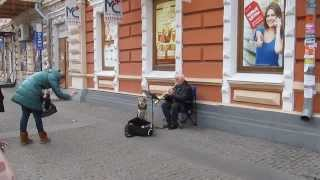 Singing Dog Helps Old Man Making Money