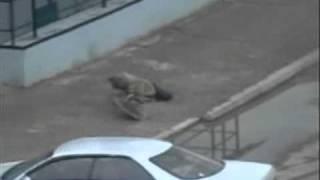 CУПЕР БОЙ !!!!(уличные драки)