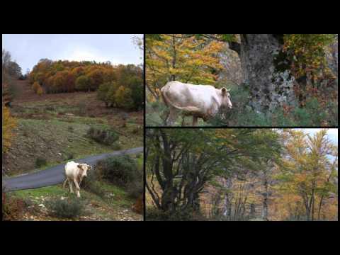 meraviglie naturali in sicilia: il parco dei nebrodi