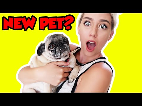 DID WE GET A NEW PET?! NEW DOGIIE?!
