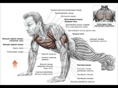 Спазм мышц руки лечение