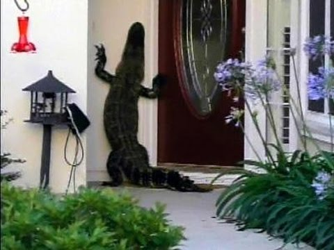 WATCH: Alligator seen ringing doorbell of S. Carolina Home!