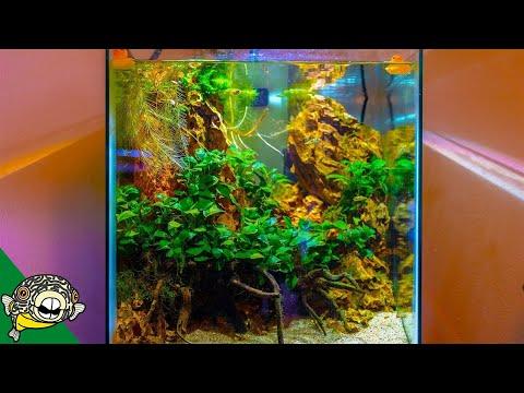 Planted Tank Fish Room Tour - Im Jealous!_Akvárium