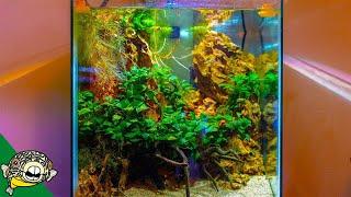 Planted Tank Fish Room Tour - I'm Jealous! by Aquarium Co-Op
