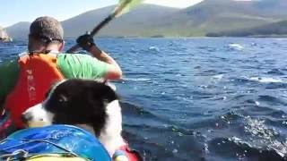 Dogs do Kayak