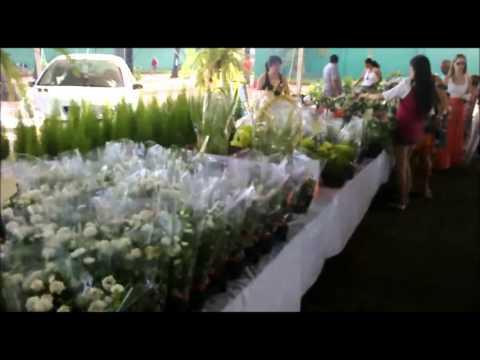 Festival de Flores de Holambra em Porto Velho【S.RIO】