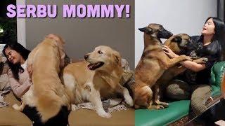 Video REAKSI ANABUL DITINGGAL MOMMY 10 HARI KE AUSSIE! MP3, 3GP, MP4, WEBM, AVI, FLV April 2019