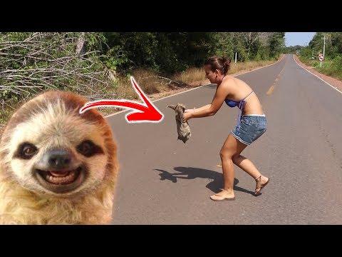 Imagens de felicidade - SALVAMOS UM ANIMAL SILVESTRE! #FELIZES! Alter do Chão #497