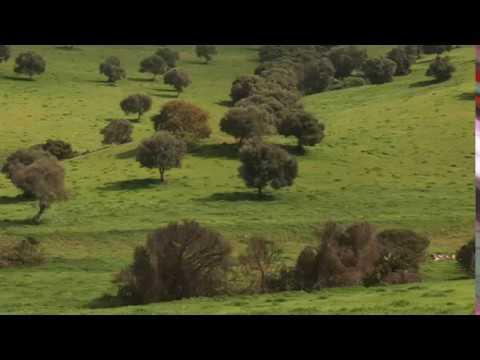 En Tu Ausencia film theme II (видео)
