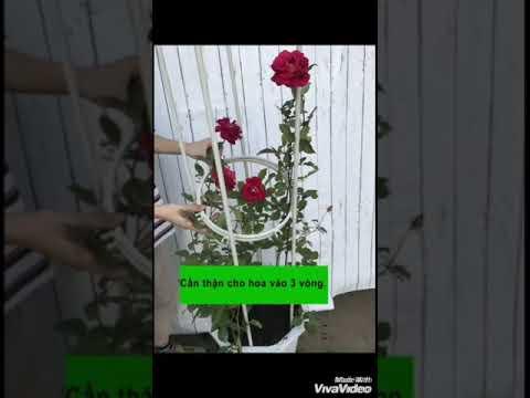 #7 khung hoa THÁP CHUÔNG - TRẮNG