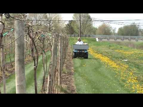 Tim fertilizing grapes