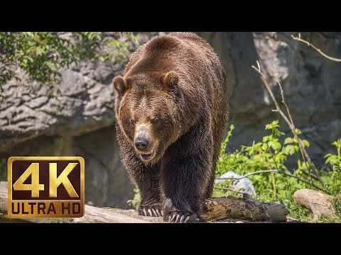 4K Ultra HD Video of Wild Animals - 1 HR 4K Wildlife Scenery with Floating Music