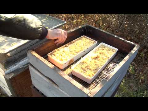 Winterizing Bee Hives Part 1 – Fall Feeding