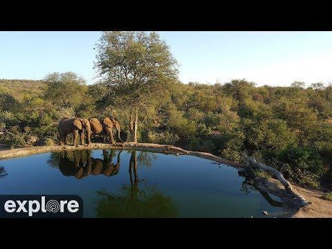 Wildtiere an einer Wasserstelle in Naledi (Südafri ...