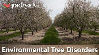 Environmental Disorders