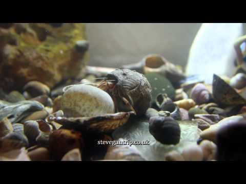 Hermit Crab Changes Shell