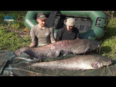 Pesca al siluro nei canali del Polesine - Star Fishing TV