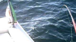 Video pesca dourada MP3, 3GP, MP4, WEBM, AVI, FLV Desember 2017