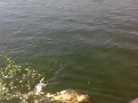 pescando piau em orindiuva sp.mp4