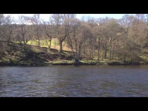 Releasing River Tay Salmon