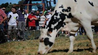 Foi a 1 de abril de 2015 que o movimento de descontentamento dos produtores de leite europeus começou a crescer. E não era mentira. Era