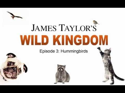James Taylor's Wild Kingdom (Episode 3: Hummingbirds)