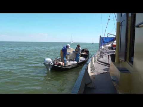 Eerste half jaar vistunnel afsluitdijk succesvol