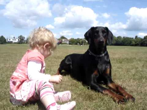doberman protects baby toddler at the park