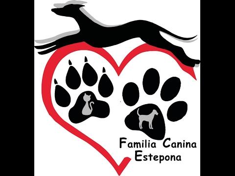 ASOCIACIÓN FAMILIA CANINA ESTEPONA protectora animales malaga asociacion perros estepona