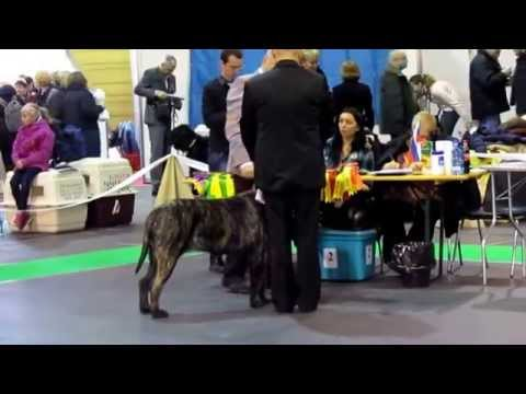 Ryga International Dogs Show Latvia 22.11.2014