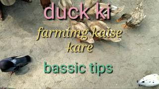 Duck ki breeding age (khaki Campbell)