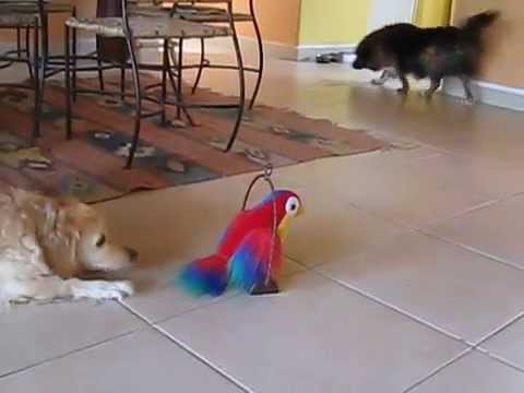 Dogs Barking & Playing With Talking Toy Parrot