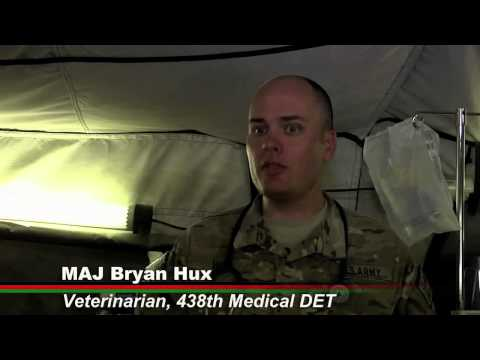 0 Military Dog Video of the Week(August 9th, 2012): K9 Healers