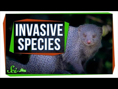 Why Can't We Just Kill Off Invasive Species?