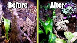 Re-Scaping My Crested Gecko Vivariums by Tyler Rugge