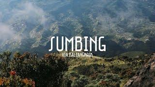 Download Video PENDAKIAN GUNUNG SUMBING via KALIANGKRIK | Tobias Evan #12 MP3 3GP MP4