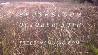 The Tree Ring music video The Rainshadow, From Brushbloom
