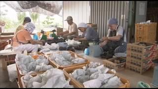 柳川旅物語