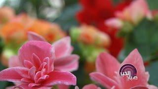 نصائح لمحبي الورود للحفاظ عليها مدة أطول