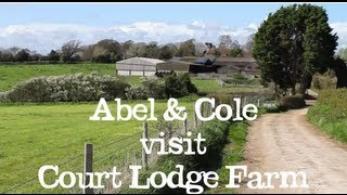 Abel & Cole visit Court Lodge Farm