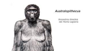 El Australopithecus y la evolución humana