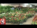 GHMC Bags 25 Awards In Garden Festival Organized By Horticulture Department | V6 News