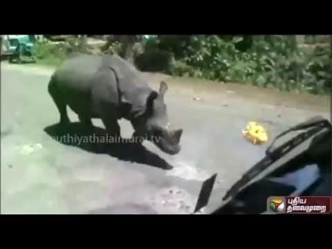 Kitchen-Cabinet-Rhinoceros-roam-in-roads-03-08-2016-Puthiya-Thalaimurai-TV