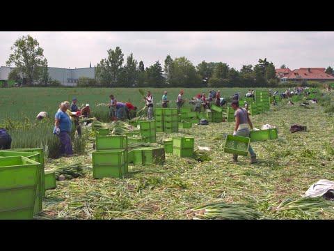 Bauernkrieg: Wer Mindestlohn zahlt, verliert | ...