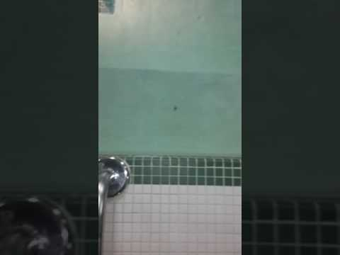 Spider in the pool!