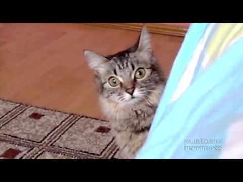 video que muestra como un gato esta apunto de atacar