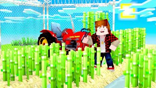 Minecraft Skyblock BIGGEST SUGAR CANE FARM in the pack? (Cosmic Sky #9)