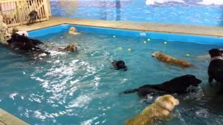 Une piscine pour chien à Charleroi :