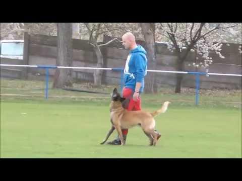 Fox von der schoenen Ecke & Pavol Šlahor   B-97 (видео)