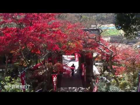 夜空赤く染めるモミジ 東山寺